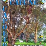 Cafouné